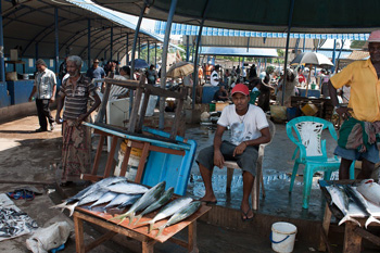 Fischmarkt in Negombo